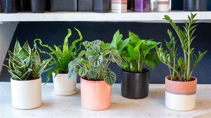 Amazing Easy Low Light Houseplants Indoor Decor 29