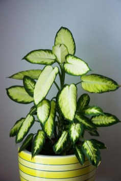 Amazing Easy Low Light Houseplants Indoor Decor 40