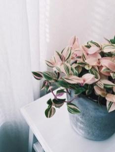 Amazing House Plants Indoor Decor Ideas Must 11