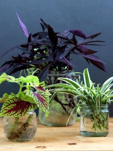 Amazing House Plants Indoor Decor Ideas Must 14