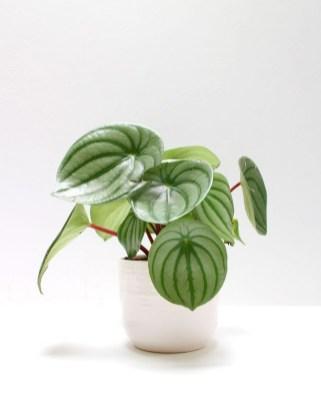 Amazing House Plants Indoor Decor Ideas Must 17