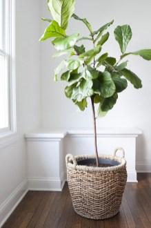Amazing House Plants Indoor Decor Ideas Must 28