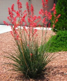 Amazing Low Maintenance Garden Landscaping Ideas 05
