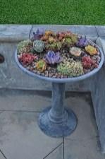 Amazing Succulents Garden Decor Ideas 10