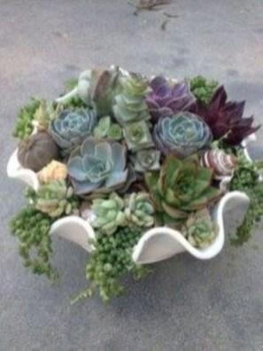 Amazing Succulents Garden Decor Ideas 14