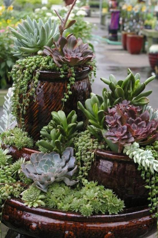 Amazing Succulents Garden Decor Ideas 36