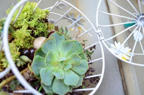 Amazing Succulents Garden Decor Ideas 38