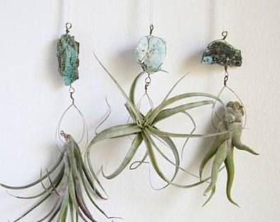 Creative Hanging Air Plants Decor Ideas 09