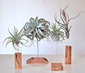 Creative Hanging Air Plants Decor Ideas 10