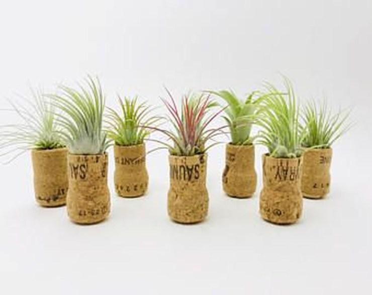 Creative Hanging Air Plants Decor Ideas 37