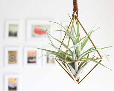 Creative Hanging Air Plants Decor Ideas 39