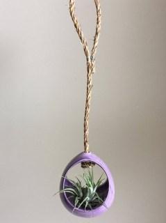 Creative Hanging Air Plants Decor Ideas 40