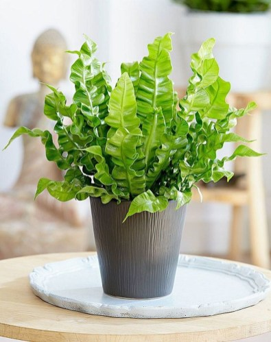 Friendly House Plants For Indoor Decoration 03