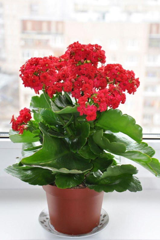 Friendly House Plants For Indoor Decoration 06