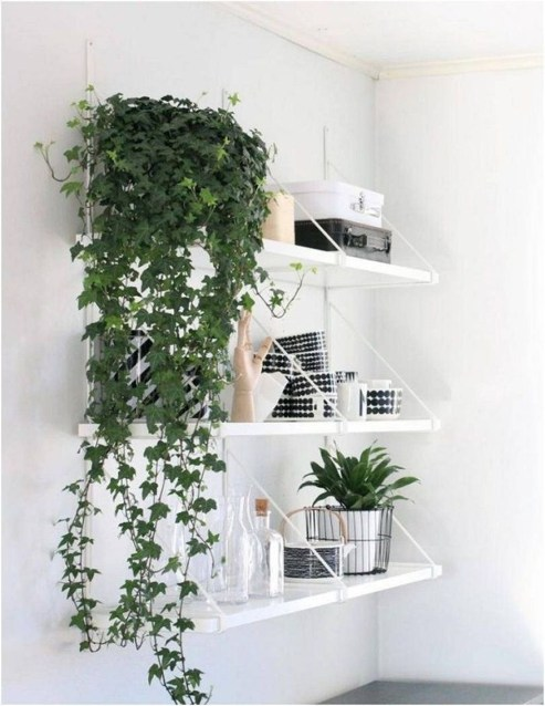 Friendly House Plants For Indoor Decoration 13