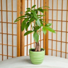 Friendly House Plants For Indoor Decoration 14