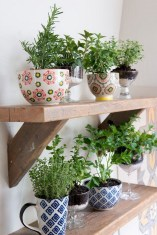 Friendly House Plants For Indoor Decoration 16