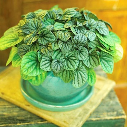 Friendly House Plants For Indoor Decoration 23