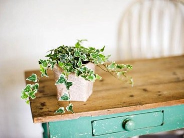 Friendly House Plants For Indoor Decoration 27
