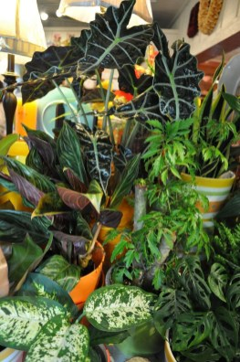 Friendly House Plants For Indoor Decoration 33