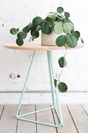 Friendly House Plants For Indoor Decoration 36