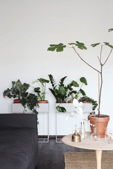 Friendly House Plants For Indoor Decoration 41