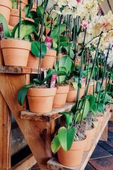 Friendly House Plants For Indoor Decoration 43