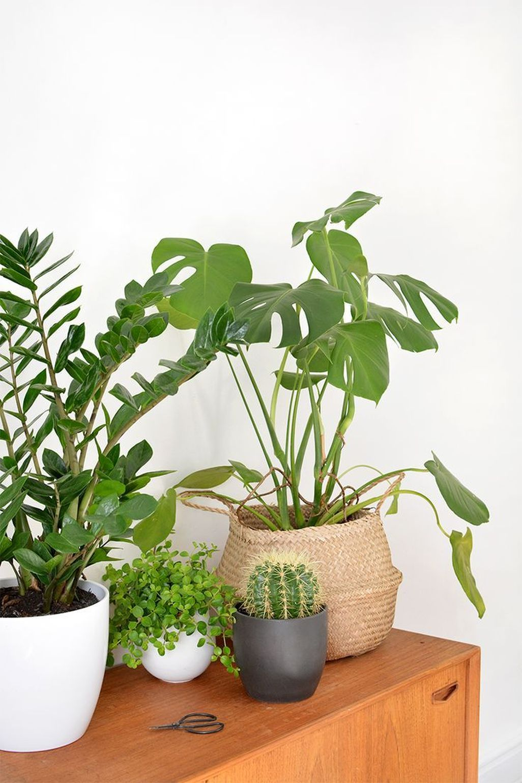 Friendly House Plants For Indoor Decoration 45
