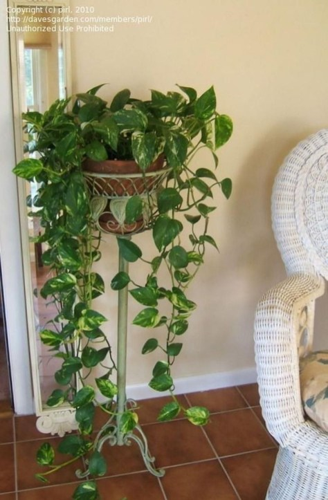Friendly House Plants For Indoor Decoration 48