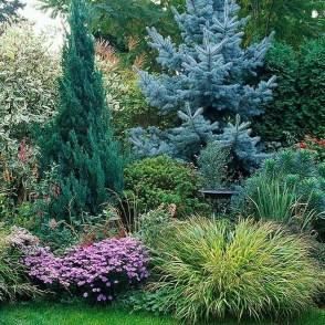 Amazing Evergreen Grasses Landscaping Ideas05