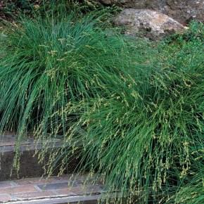Amazing Evergreen Grasses Landscaping Ideas11