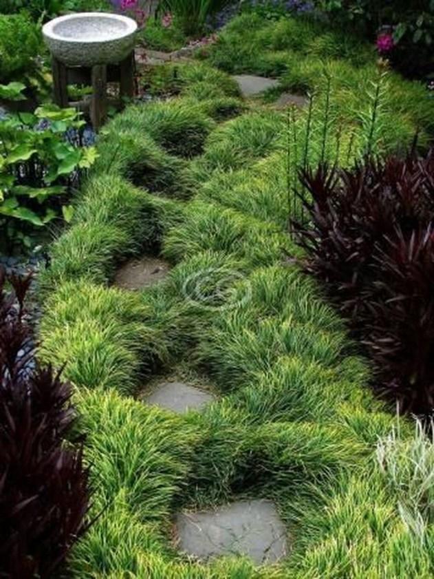 Amazing Evergreen Grasses Landscaping Ideas16