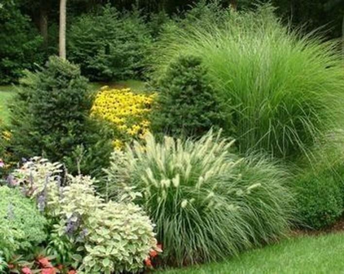 Amazing Evergreen Grasses Landscaping Ideas17