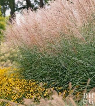 Amazing Evergreen Grasses Landscaping Ideas19