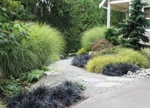 Amazing Evergreen Grasses Landscaping Ideas21