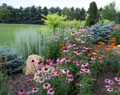 Amazing Evergreen Grasses Landscaping Ideas22