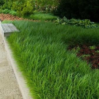 Amazing Evergreen Grasses Landscaping Ideas29
