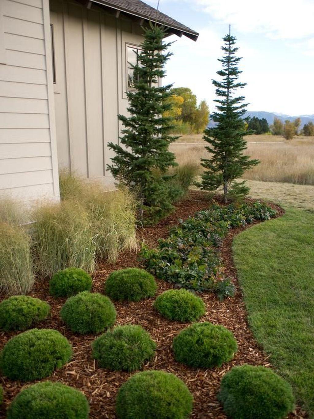Amazing Evergreen Grasses Landscaping Ideas42