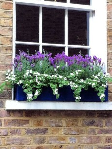 Amazing Windows Flower Boxes Design Ideas Must See01