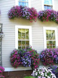 Amazing Windows Flower Boxes Design Ideas Must See10