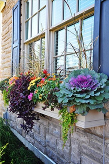 Amazing Windows Flower Boxes Design Ideas Must See29