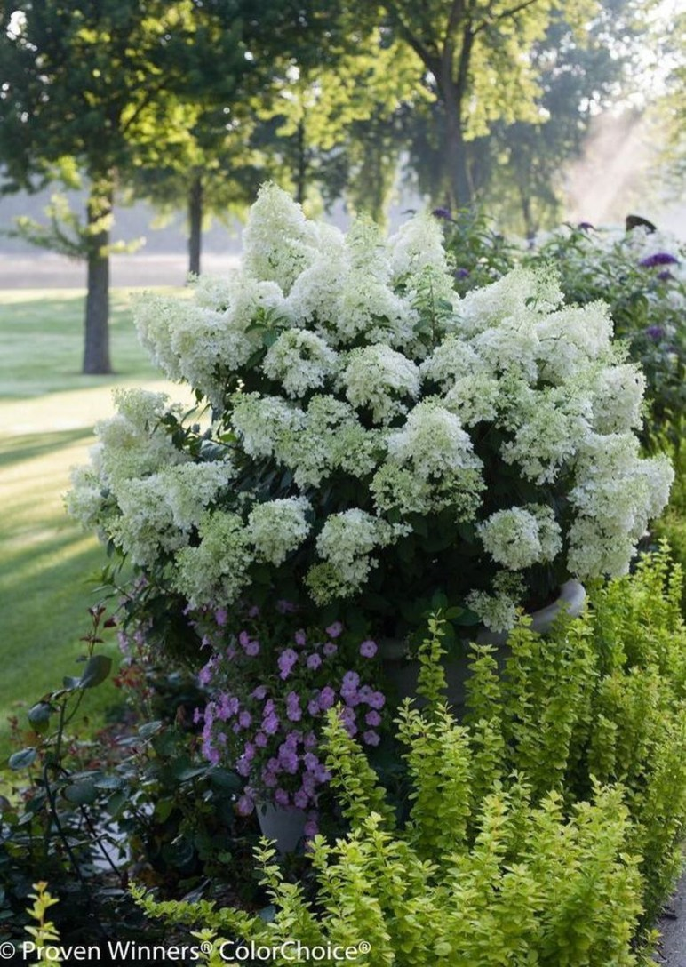 Elegant Colorful Bobo Hydrangea Garden Landscaping Ideas08