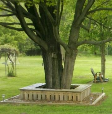 Amazing Big Tree Landscaping Ideas05
