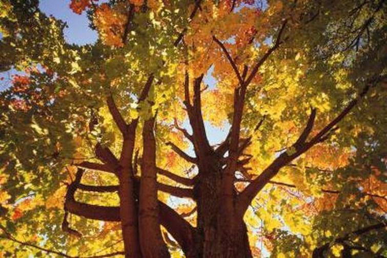 Amazing Big Tree Landscaping Ideas30