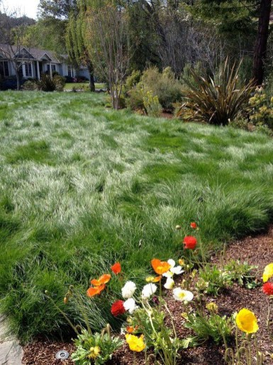 Amazing Grass Landscaping For Home Yard26
