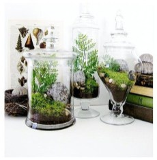 Awesome Ideas To Make Glass Jars Garden For Your Home Decor02