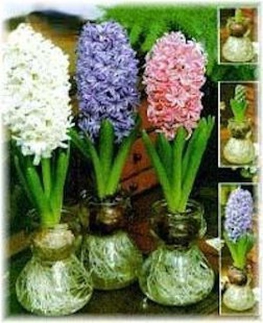 Awesome Ideas To Make Glass Jars Garden For Your Home Decor19
