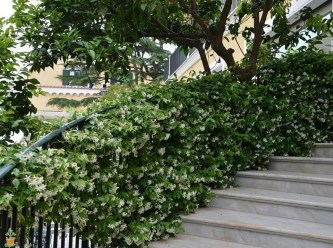 Beautiful Evergreen Vines Ideas For Your Home09