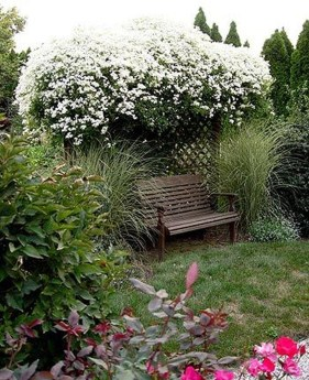 Beautiful Evergreen Vines Ideas For Your Home37