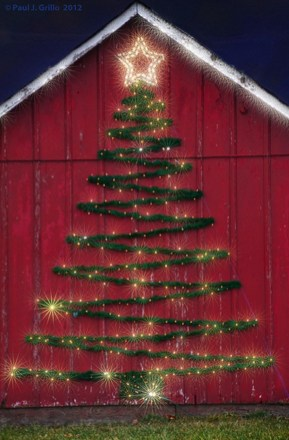 Amazing Outdoor Christmas Trees Ideas 27